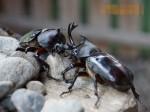 昆虫ドーム001