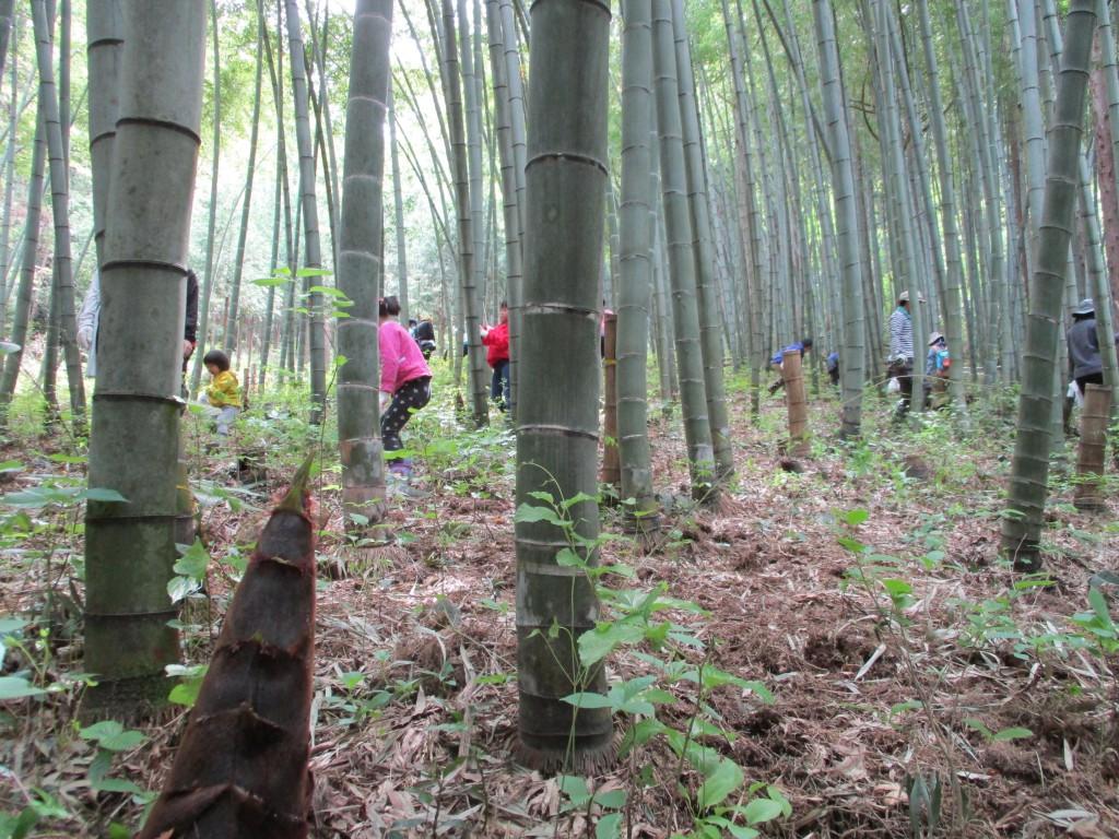 タケノコ掘り0251
